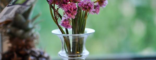 Dejlige Gry havde blomster med hjem til mig fra Ærø